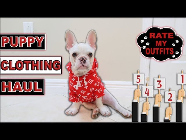 new-puppy-clothing-haul-rate-cloud-s-outfits