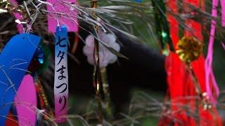 さくら学院、七夕に2014年度卒業公演BD/DVDリリース 音楽ナタリー 6月7...