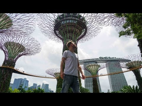 AMAZING FOREST OF THE FUTURE!