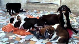 Puppies- Winnie,minnie,cinnie,ginnie & Honey