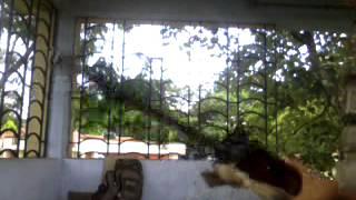 Gojri bole: Foji Basharat Momin bhalesi Doda gndoh