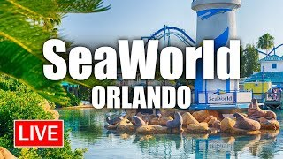 🔴 Live: A Relaxing Afternoon from SeaWorld Orlando | SeaWorld Live Stream