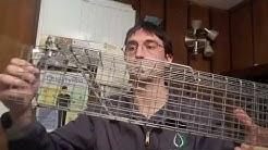 Squirrel Removal From Attics Cleveland, Ohio