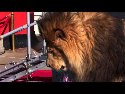Leo the Lion Paw Print Highlight at the Metro-Goldwyn-Mayer Kicks Off 90th Anniversary Celebration