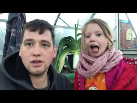 Dean's - Lost The Plot 19/11/17 poly tunnel build, collecting giant leek & onions + Allotment update
