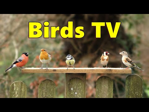 Birds TV ⭐ 8 HOUR Bird Bonanza for People, Cats and Dogs to Watch ⭐