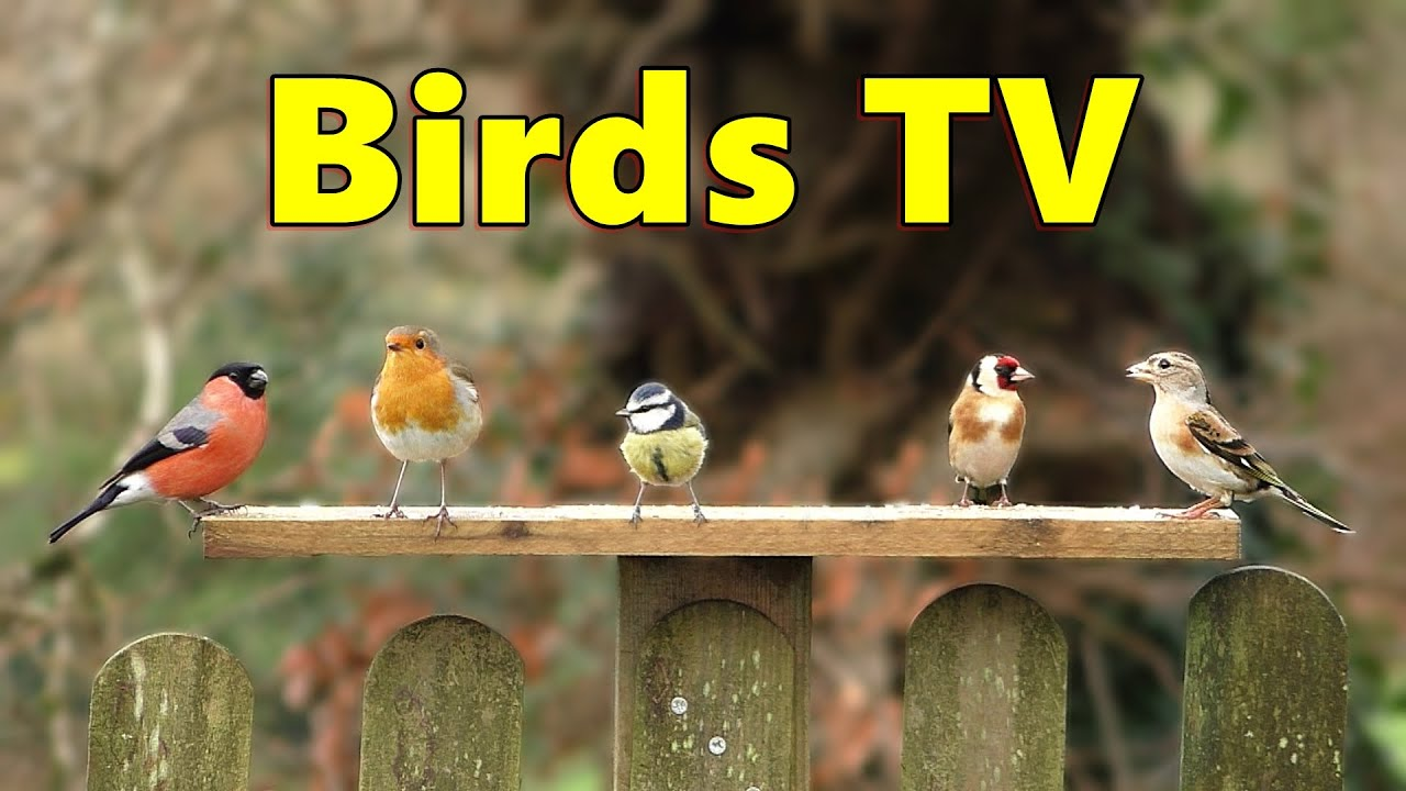 Download Birds TV ⭐ 8 HOUR Bird Bonanza for People, Cats and Dogs to Watch ⭐