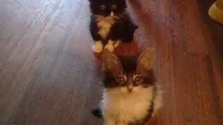 Тощие котята плакали в электричке, но только два человека обратили на них внимание