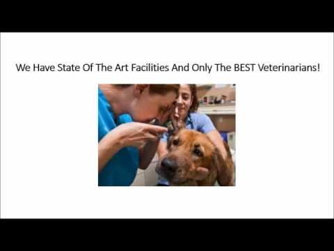 """24 <span id=""""hour-emergency-vet"""">hour emergency vet</span>erinarian In Jacksonville FL Call (904) 201-9922 