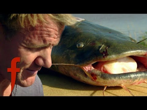 Gordon Ramsay Learns How To Catch Catfish | The F Word