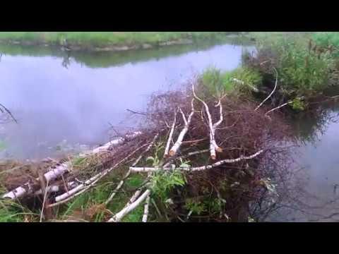 Бобровые плотины