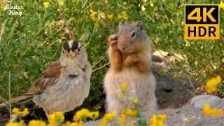 TV Para Gatos  Lindas ardillas y flores. Hermosos gorriones y palomas (4K HDR)