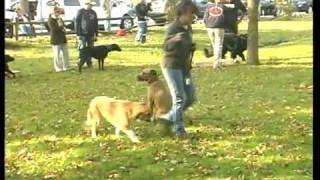 New York Dog Training, Best Friends Dog Training
