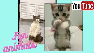 Приколы с животными смешные котики собаки сборник 23 Funny animals video Collection