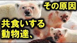 チンパンジー、熊、カバ...共食いする動物たち ☆チャンネル登録はコチラ...