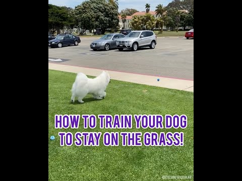 dog-training:-stay-on-the-grass!