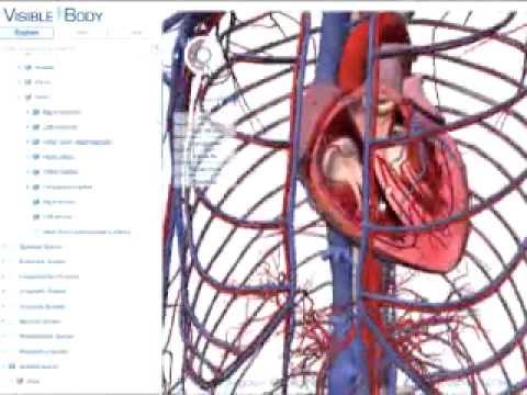 3D về cấu tạo cơ thể người