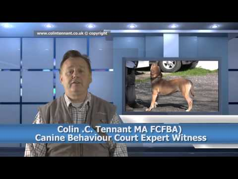 DOG EXPERT WITNESS BANNED BREEDS -Colin Tennant MA  Dog TV