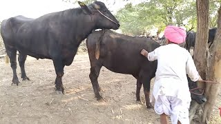 Jabardasth Mohra first meeting Pada first time meeting try by funny farmer