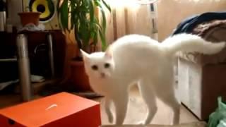 Как уходят коты Ver.2