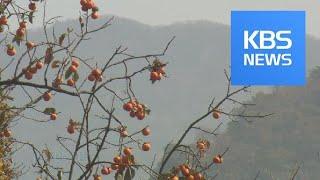[뉴스광장 영상] 깊어가는 가을 / KBS뉴스(News)