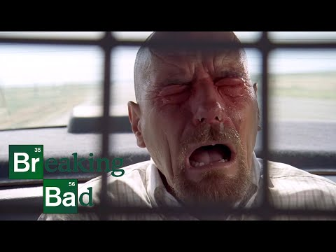 breaking bad fly rotten tomatoes