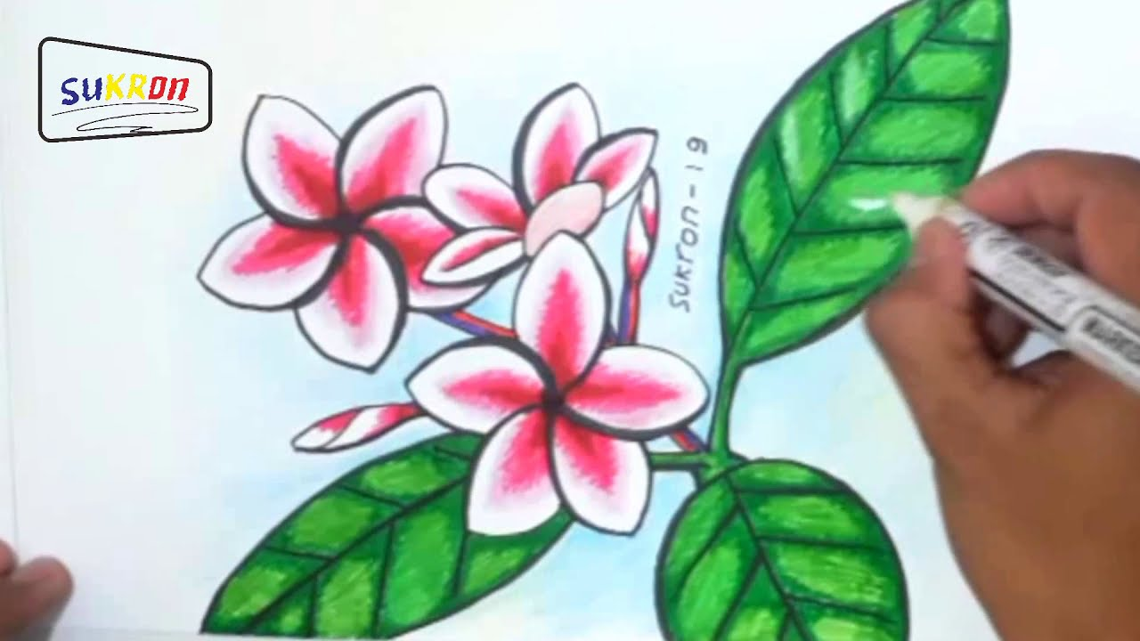 Cara Menggambar Dan Mewarnai Bunga Kamboja Menggunakan Spidol Youtube