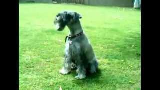 Trudy Barking In Backyard