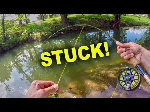 Multi-Species Fly Fishing in a Creek