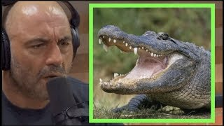 Joe Rogan - I HATE Alligators thumbnail