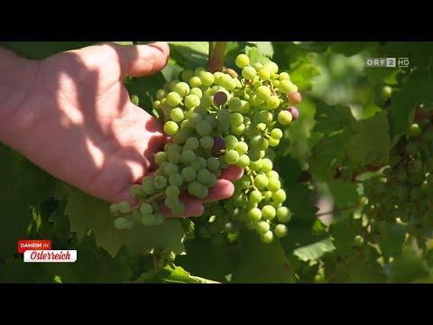 Walk of Wine beim Hotel Larimar in Stegersbach