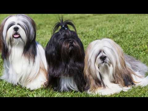 Top 10 Most Ancient Dog Breeds on Earth #2