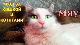 Как ухаживать за кошкой? Уход за кошкой Чем кормить кошку? Как ухаживать за котёнком Опухоль у кошки