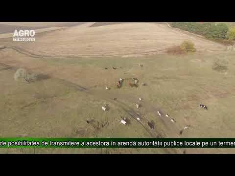 Terenurile Agricole Vor Putea Fi Cumpărate Doar De Cetățenii RM