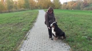 Прогулка с собакой (гостиница для собак)