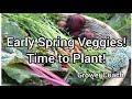 Spring Veggie Plantings