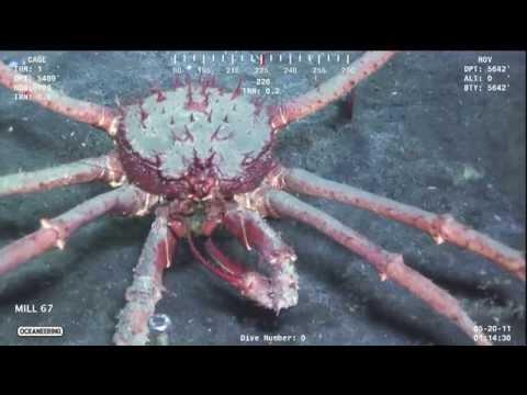 Gulf SERPENT 2014 Highlights
