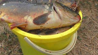 Рыбалка . Снова ведро рыбы  Ловля на поплавок карпов и карасей . My fishing