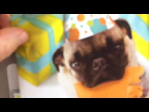 Pug Farting Happy Birthday