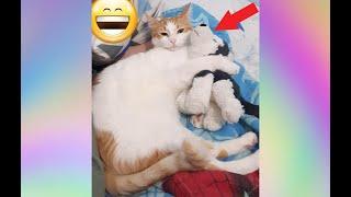 Приколы смешного кота Лючи Смешные коты и смешные кошки Приколы про котов Смешные животные