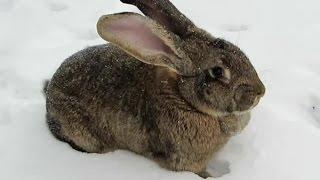 Hare in nature. Заяц в природе