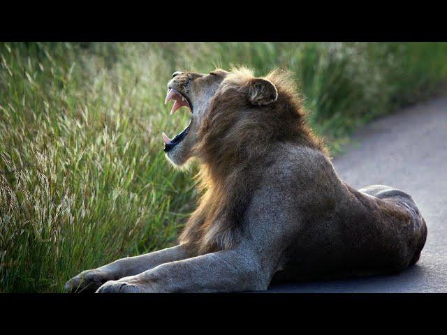 La planète a perdu les deux-tiers de ses animaux sauvages, selon WWF
