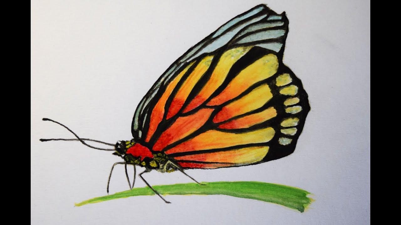 Como Pintar Con Acuarela Paso A Paso Mariposa