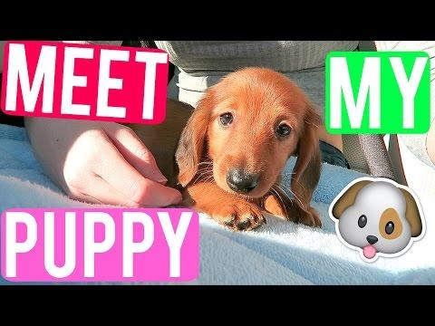 MEET MY NEW PUPPY!   VLOGMAS