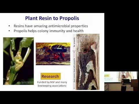 Marla Spivak: Protecting Pollinators