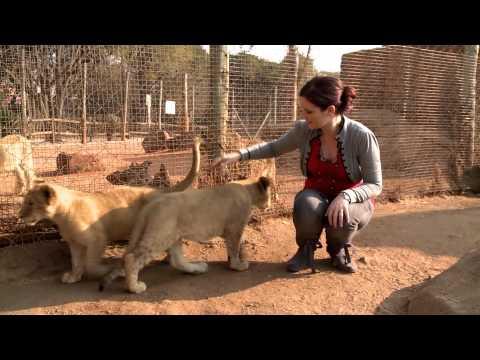 InterContinental Johannesburg Sandton Towers Concierge Video