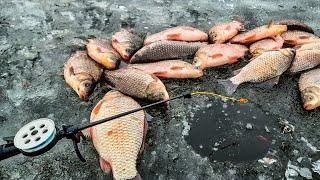 КАРАСИ подымают КИВКИ Ловля карася зимой Зимняя рыбалка 2021