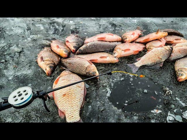 КАРАСИ подымают КИВКИ, Ловля карася зимой, Зимняя рыбалка 2021