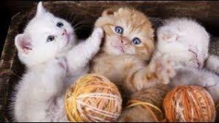 Выставка кошек в Днепре. Март 2018 г.