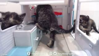 The kittens go camping - TinyKittens.com thumbnail